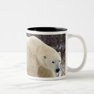 Polar Bear Ursus maritimus) in Churchill Mugs