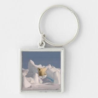 polar bear, Ursus maritimus, in rough ice on 2 Keychain