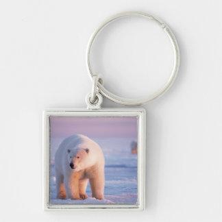 polar bear, Ursus maritimus, large boar on the Keychain