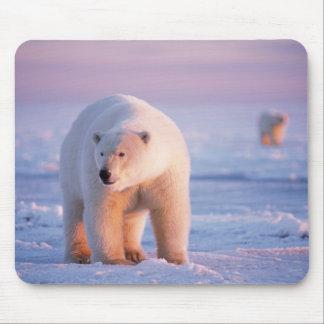 polar bear, Ursus maritimus, large boar on the Mouse Pad