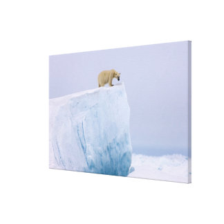 polar bear, Ursus maritimus, on a giant Canvas Print