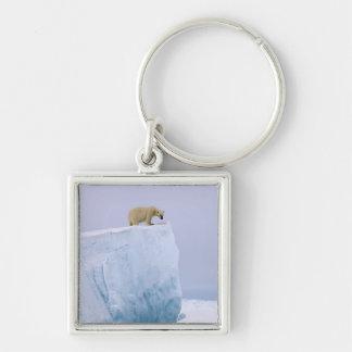 polar bear, Ursus maritimus, on a giant Keychain