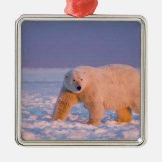 polar bear, Ursus maritimus, on ice and snow, 2 Metal Ornament