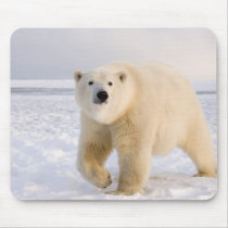 polar bear, Ursus maritimus, on ice and snow, 2 Mouse Pad