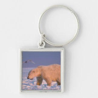polar bear, Ursus maritimus, on ice and snow, 3 Keychain
