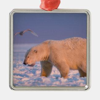 polar bear, Ursus maritimus, on ice and snow, 3 Metal Ornament