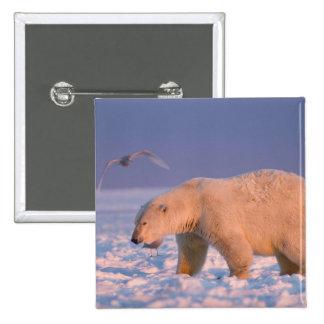 polar bear, Ursus maritimus, on ice and snow, 3 Pinback Button