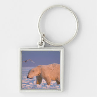 polar bear, Ursus maritimus, on ice and snow, 3 Silver-Colored Square Keychain