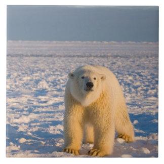 polar bear, Ursus maritimus, on ice and snow, Ceramic Tile