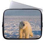 polar bear, Ursus maritimus, on ice and snow, Computer Sleeves