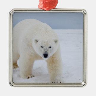 polar bear, Ursus maritimus, on ice and snow, Metal Ornament