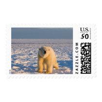 polar bear, Ursus maritimus, on ice and snow, Postage