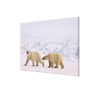 polar bear, Ursus maritimus, pair in rough ice Canvas Print