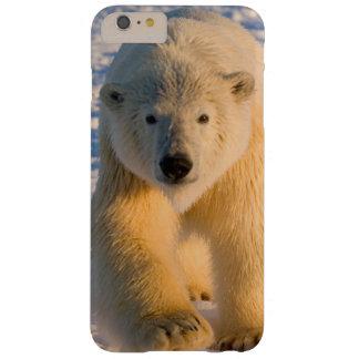 polar bear, Ursus maritimus, polar bear on ice Barely There iPhone 6 Plus Case