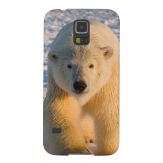 polar bear, Ursus maritimus, polar bear on ice Case For Galaxy S5
