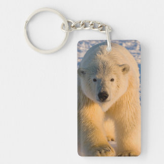 polar bear, Ursus maritimus, polar bear on ice Double-Sided Rectangular Acrylic Keychain