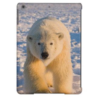 polar bear, Ursus maritimus, polar bear on ice iPad Air Case