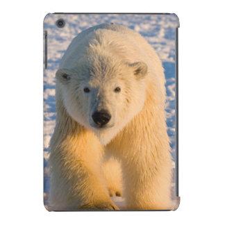 polar bear, Ursus maritimus, polar bear on ice iPad Mini Retina Cover