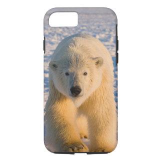 polar bear, Ursus maritimus, polar bear on ice iPhone 7 Case