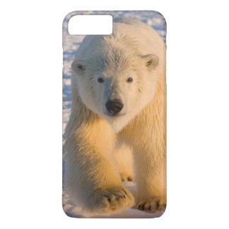 polar bear, Ursus maritimus, polar bear on ice iPhone 7 Plus Case