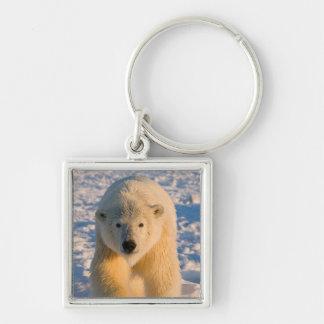 polar bear, Ursus maritimus, polar bear on ice Keychain