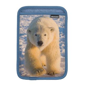 polar bear, Ursus maritimus, polar bear on ice Sleeve For iPad Mini