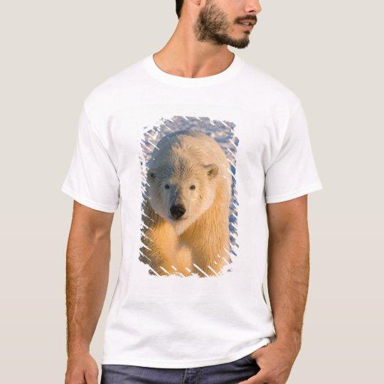 polar bear, Ursus maritimus, polar bear on ice T-Shirt