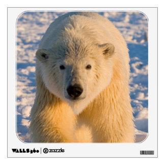 polar bear, Ursus maritimus, polar bear on ice Wall Decal