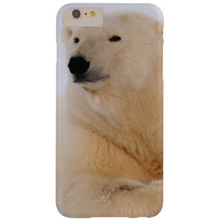 polar bear, Ursus maritimus, resting on the Barely There iPhone 6 Plus Case