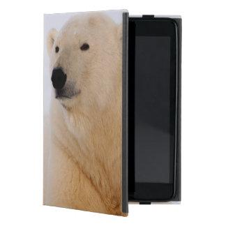 polar bear, Ursus maritimus, resting on the Cover For iPad Mini