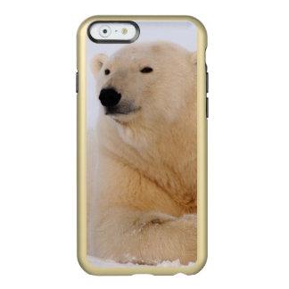 polar bear, Ursus maritimus, resting on the Incipio Feather Shine iPhone 6 Case