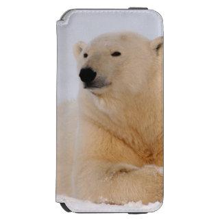 polar bear, Ursus maritimus, resting on the iPhone 6/6s Wallet Case