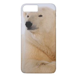 polar bear, Ursus maritimus, resting on the iPhone 7 Plus Case