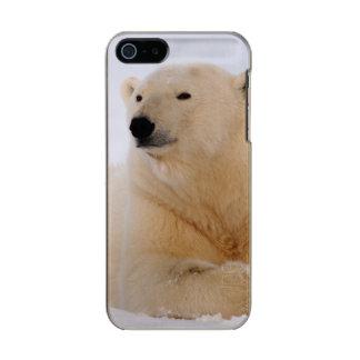 polar bear, Ursus maritimus, resting on the Metallic Phone Case For iPhone SE/5/5s