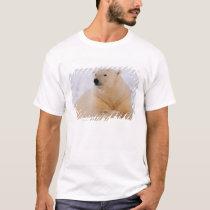 polar bear, Ursus maritimus, resting on the T-Shirt