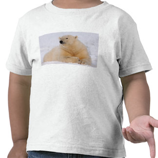 polar bear, Ursus maritimus, resting on the Tshirts