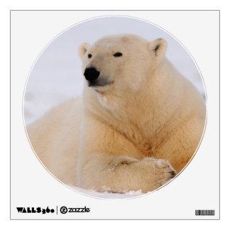 polar bear, Ursus maritimus, resting on the Wall Sticker