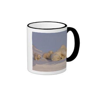 polar bear, Ursus maritimus, sow playing with Mug