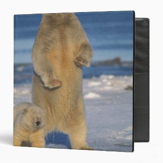 polar bear, Ursus maritimus, sow with cub 2 3 Ring Binder