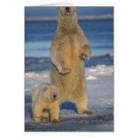 polar bear, Ursus maritimus, sow with cub 2 Greeting Card