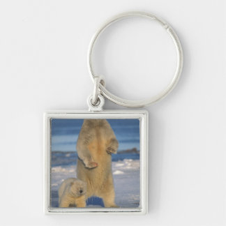 polar bear, Ursus maritimus, sow with cub 2 Silver-Colored Square Keychain