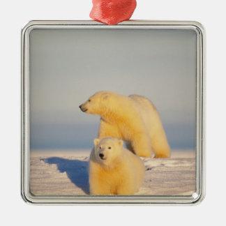 polar bear, Ursus maritimus, sow with cub 3 Square Metal Christmas Ornament