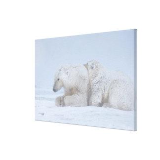 polar bear, Ursus maritimus, sow with cub Canvas Print