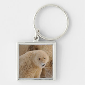 polar bear, Ursus maritimus, sow with cub Keychain