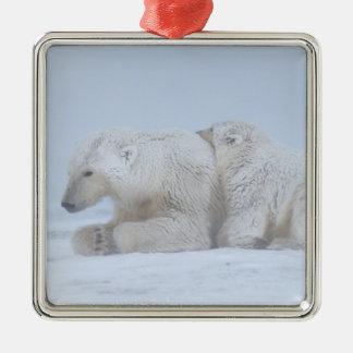 polar bear, Ursus maritimus, sow with cub Metal Ornament