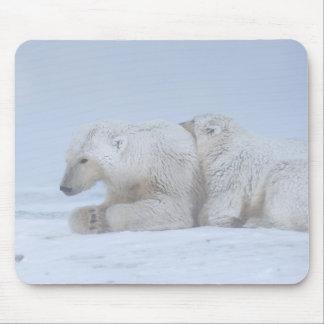 polar bear, Ursus maritimus, sow with cub Mouse Pad