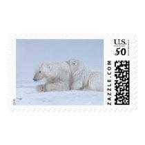 polar bear, Ursus maritimus, sow with cub Postage