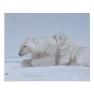 polar bear, Ursus maritimus, sow with cub Poster