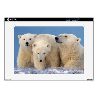 """polar bear, Ursus maritimus, sow with cubs 15"""" Laptop Skin"""