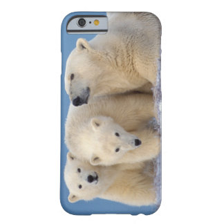 polar bear, Ursus maritimus, sow with cubs Barely There iPhone 6 Case